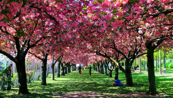 Weather in New York - Spring