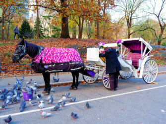 Carriage Ride in New York