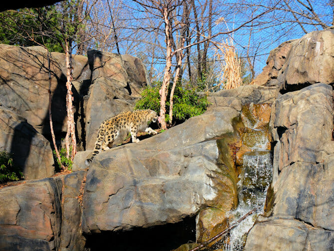 Central Park Zoo New York