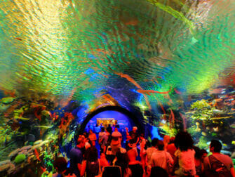 New York Aquarium - Coral Reef